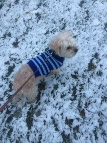 Winter is Coming: Safety Tips for Animals
